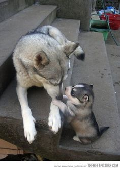 Mom, they called me 'husky'