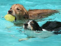 swimming puppies - Bing Images