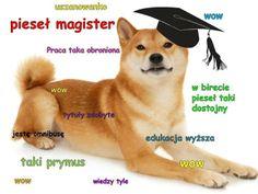 Doge Meme, Its Time To Stop, Cute Dog Photos, Drop Top, Everything Funny, Memes, Cute Dogs, Corgi, Rain