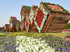 It should come as no surprise that the world's largest natural flower garden is located in the decadent desert landscape of Dubai. Here at the Dubai Miracle Garden, 45 million flowers blossom into dazzling topiary displays, towering pyramids and intricate, fragrant walkways.