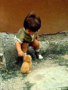 Little ginger Tom kitten with friend.