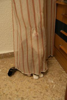 Un Chat qui doit croire qu'il est caché et que personne ne le voit