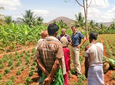 Seth Goldman, President & TeaEO of Honest Tea, meeting with Kollegal farmers and witnessing the harvest of Fair Trade Certified Tulsi tea.