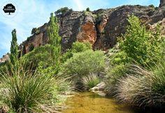ALTO TURIA  .Está situado en la comarca de Los Serranos al norte de la provincia de Valencia y al sur de la de Teruel. Bosque de pino y matorral mediterráneo donde también crece el lentisco, el romero, la jara blanca y la coscoja.