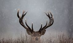 ❥ oh deer