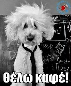 Greek Words, Albert Einstein, Animal Pictures, Dog Lovers, Funny Jokes, Humor, Memes, Dogs, Life