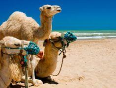 Viaja a Túnez con Groupalia: noche con desayuno y acceso al Hamman y más en el Hotel Isis Thalasso & Spa Djerbe 4*. Viajar, que dulce placer.