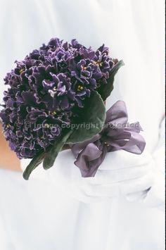 African Violet Bridal Posy