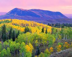 Elk Mountain by John Fielder High up in the Routt National Forest northwest of Steamboat Springs are a network of roads that penetrate the forest. At the end of September, trees turn various shades at various rates depending upon which ones are connected together by their roots. Pink light of sunrise complements the warm yellows of autumn.
