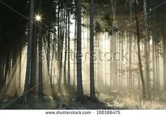 Autumnal forest on a foggy November morning.