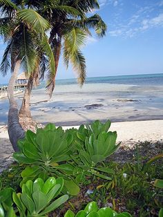 Beaches of San Pedro, Belize.  Go to www.YourTravelVideos.com or just click on photo for home videos and much more on sites like this.