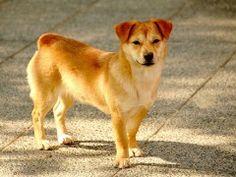 Terapias assistidas com cães rompem barreiras entre paciente e médico