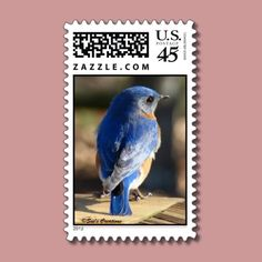 Sweet Eastern Bluebird Postage Stamps by birdersue from Zazzle - Digital photography by Sue Melvin