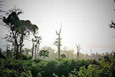 Little Andaman Island (North Andaman Island, India) - Top Tips Before You Go - TripAdvisor Andaman And Nicobar Islands, Trip Advisor, India, Mountains, Tips, Plants, Travel, Goa India, Viajes
