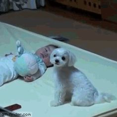 Dog Stops Baby From Crying