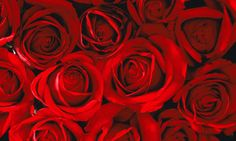 nice Fotos de rosas rojas #imagenesdeamor