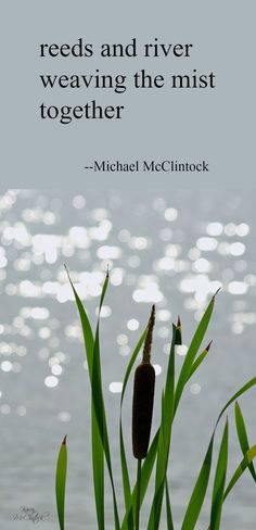 Haiku poem: reeds and river-- by Michael McClintock.