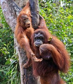 Tanjung Puting National Park, Indonesia - Discount Cruises, Last ...