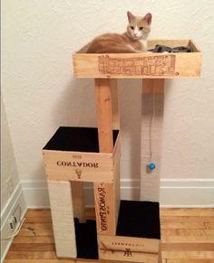 caisses en bois pour fabriquer un arbre à chat à trois niveaux, idée comment fabriquer u lit chat soi meme, chat roux