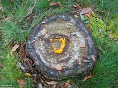Een 'schietschijf' met in het midden het 'doel van het leven'. Zie ook het artikel over Universeel soefisme op: http://www.deinfodeler.nl/news/wat-is-universeel-soefisme-deel-1/  #spiritualiteit #religie #paddenstoelen #natuur #buiten