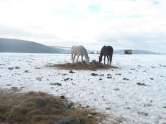 White and brown horses in snowy landscape Brown Horse, Photo Editing, Elephant, Horses, Stock Photos, Fine Art, Landscape, Pictures, Photography