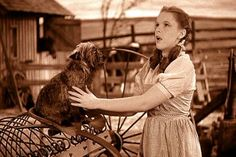 """Somewhere Over The Rainbow performed by Judy Garland in """"The Wizard of Oz"""" Wizard Of Oz 1939, Land Of Oz, Judy Garland, Over The Rainbow, The Wiz, Old Movies, Popular Culture, Back In The Day, I Movie"""