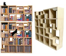 cat library 2