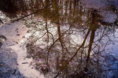Spaziergang zu Ostern  #omd #em1 #olympus #olympusomd #instagood #instalike #instadaily  #pictureoftheday #art #badlauterberg #lauterberg #oder #spaziergang #hike #harz #baum #tree #mirror #spiegelung #wasser #water