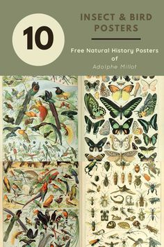 Free to download and print high resolution vintage Natural History Poster of Adolphe Millot. #naturalhistory #vintageillustrations History Posters, Nature Posters, Printable Scrapbook Paper, Printable Art, Free Printables, Vintage Botanical Prints, Botanical Posters, Bird Poster, Picture Boxes