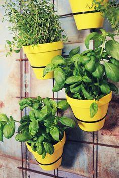 Hanging herbs garden