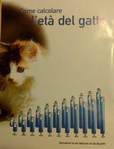 Anche la socializzazione nel gatto ha la sua importanza!  http://www.amicipertuttalavita.com/2017/05/socializzazione-nei-gatti/