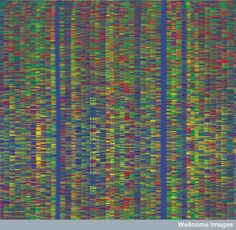 A human DNA sequence: each of the vertical lanes shows the sequence of nucleobases in a stretch of DNA. Each base is represented by a different colour. Flickr: wellcome images