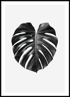 Elegantes Botanik-Poster