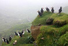 Resultado de imagen de faroe islands