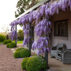 Stonefields the Farmhouse - Paul Bangay - Stonefields the Farmhouse & Private Tours Landscape Design, Garden Design, House Design, Paying Guest, City Folk, Daylesford, Wisteria, Fruit Trees, Pretty Flowers