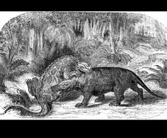 Iguanodon  by Eduard Riou (1838-1900)  from The World Before the Deluge  1872 United States