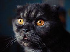 Автор @nikola_popsoda #росфото #российскоефото #rosphoto_top #rosphoto via Rosphoto on Instagram - #photographer #photography #photo #instapic #instagram #photofreak #photolover #nikon #canon #leica #hasselblad #polaroid #shutterbug #camera #dslr #visualarts #inspiration #artistic #creative #creativity