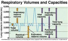 respiratory volumes | respiratory volumes shown on a spirometry reading