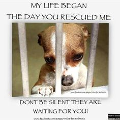 """Please adopt !!! The sadness I feel looking into cages is nothing compared 2how it must feel looking out.""""-unknown.../Saving ONE animal won't change the world but it will change the world for THAT ONE animal."""
