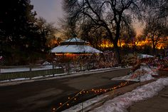 Christmas lights at the Denver Zoo at sunset.