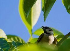 Cum împiedicăm viespile să vandalizeze via și livada | Paradis Verde Plantar, Organic, Paradis, Medicine, Horsehair, Insects