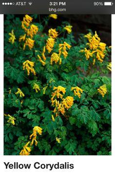 Tall shade plant 2