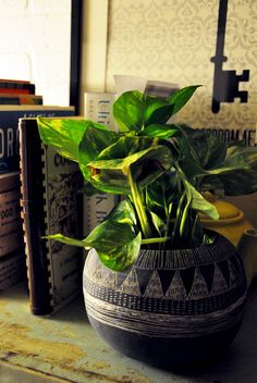 Life is really simple, but we insist on making it complicated.  Confucius  *blend of african decor & plants