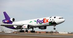 The Fed Ex Panda Express arrives at Toronto airport. Giant pandas, Er Shun and Da Mao, arrive in Canada today after a 18 hour flight, heading to Toronto Zoo as part of a long-term conservation initiative.