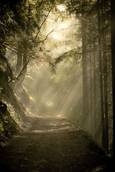 If only my photography was this good!  (nature,woods,sun,sunlight,forest,beauty)