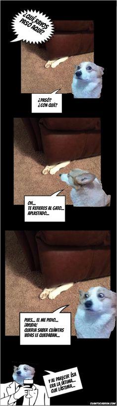 Así se comprueba las vidas que tiene un gato...        Gracias a http://www.cuantocabron.com/   Si quieres leer la noticia completa visita: http://www.estoy-aburrido.com/asi-se-comprueba-las-vidas-que-tiene-un-gato/