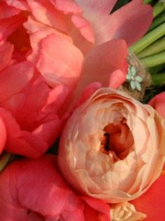 Coral peonies and Vuvuzela traditional blousie roses.