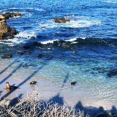 Sea Lions at La Jolla Cove Travel Diary: The Boho Socialite