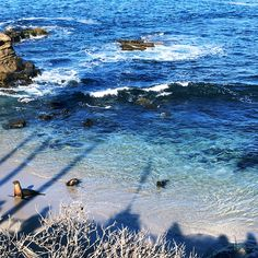 Sea Lions at La Jolla Cove  Travel Diary: The Boho Socialite