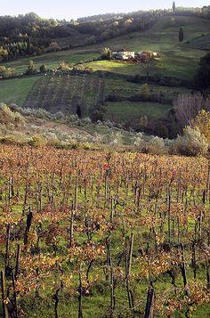 Chianti Vineyard and Farmhouse | by jimgeverett